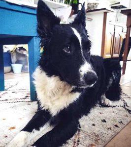 avisclient-euskanimal-POPS-chien