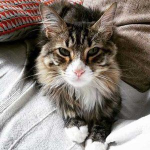 chat-couverture-chatheureux